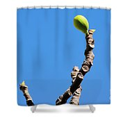 Bright Fig Against The Sky. Shower Curtain