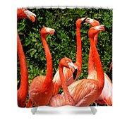 Bright Flamingos Shower Curtain