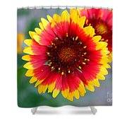 Bright Floral Day Shower Curtain
