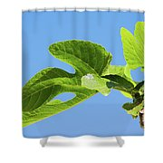 Bright Green Fig Leaf Against The Sky Shower Curtain