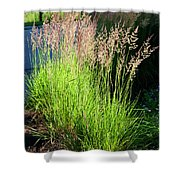 Bright Green Grass By The Pond Shower Curtain