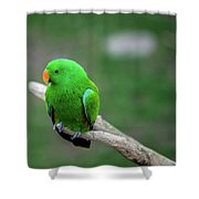 Bright Green Parrot Shower Curtain