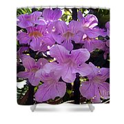 Bright-lillac Flowers 6-22-a Shower Curtain