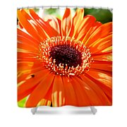 Bright Orange Gerbera  Shower Curtain
