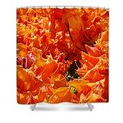 Bright Orange Rhodies Art Prints Canvas Rhododendons Baslee Troutman Shower Curtain