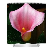 Bright Pink Calla Shower Curtain