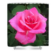 Bright-pink Rose 049 Shower Curtain