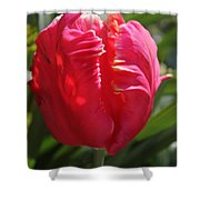 Bright Pink Tulip1 Shower Curtain