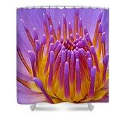 Bright Purple Lotus Shower Curtain