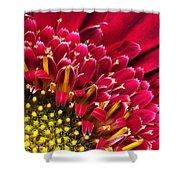 Bright Red Gerbera Daisy Shower Curtain