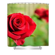 Bright Red Rose Shower Curtain