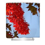 Bright Red Sunlit Autumn Leaves Fall Trees Shower Curtain