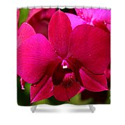 Bright Scarlet Red Orchid Shower Curtain