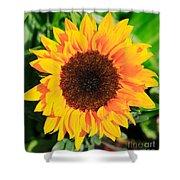 Bright Sunflower Shower Curtain