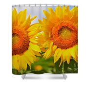 Bright Sunflowers Shower Curtain