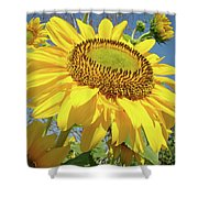 Bright Sunny Happy Yellow Sunflower 10 Sun Flowers Art Prints Baslee Troutman Shower Curtain