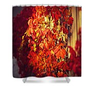 Bright Sunny Red Autumn Plants Shower Curtain