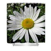 Bright White Flower With Water Droplets Shower Curtain