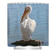 Bright White Pelican Shower Curtain