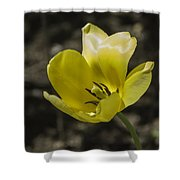 Bright Yellow Tulip Squared Shower Curtain