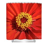 Bright Zinnia Shower Curtain