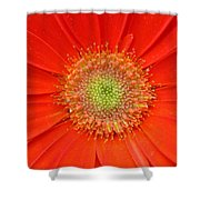 Brighteyes Shower Curtain