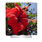Brightly Colored Hibiscus On The Greek Island Of Mykonos  Shower Curtain