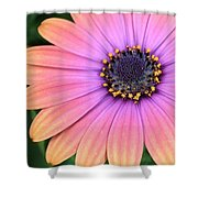 Briliant Colored Daisy Shower Curtain