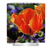 Brilliant Bright Orange And Red Flowering Tulips In A Garden Shower Curtain