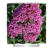 Brilliant Hot Pink Flowering Phlox Flowers In A Garden Shower Curtain