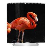 Brilliant Pink Flamingo Shower Curtain