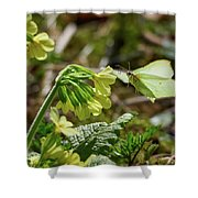 Brimstone On Cowslip Primrose Shower Curtain