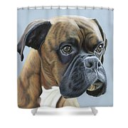 Brindle Boxer Dog - Jack Shower Curtain