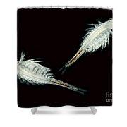 Brine Shrimp, Artemia Salina, Lm Shower Curtain