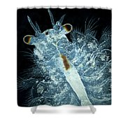 Brine Shrimp Artemia Salina Shower Curtain