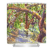 Briones Forest Near Springhill Road Shower Curtain