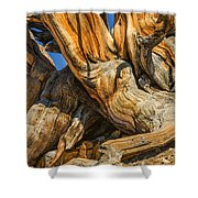 Bristle Cone Pine Tree White Mtns Ca Color Img 6799 Shower Curtain