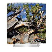 Bristlecone Great Basin Landscape Shower Curtain
