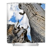 Bristlecone Great Basin Portrait Shower Curtain