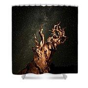 Bristlecone Nights Shower Curtain