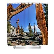 Bristlecone Pine Forest Shower Curtain
