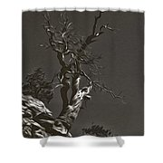 Bristlecone Pine In Black And White Shower Curtain