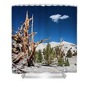 Bristlecone Pine - Pinus Longaeva Shower Curtain
