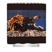 Bristlecone Pine - White Mountains Shower Curtain