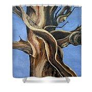 Bristlecone Tree No.4 Shower Curtain