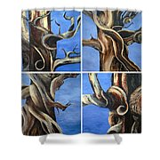 Bristlecone Tree Set Shower Curtain