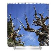 Bristlecone Trees Shower Curtain