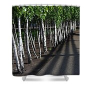 British Birch Shower Curtain
