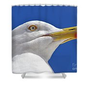 British Herring Gull Shower Curtain