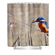 British Kingfisher Shower Curtain